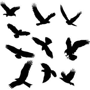 Raamstickers Raamvogels (permanent
