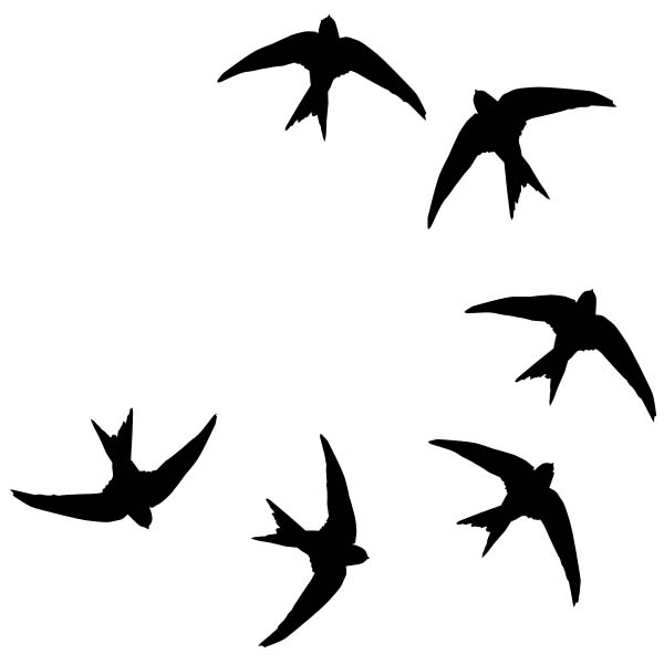 vogelstickers Zwaluwen.