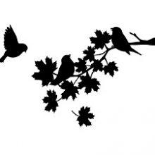 raamsticker tak met 3 vogels